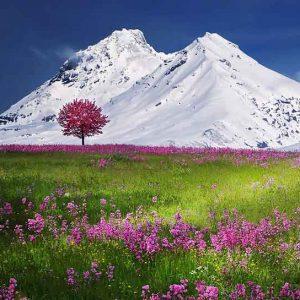 naturaleza-flores-rosadas